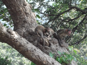 Elephanta Island monkeys
