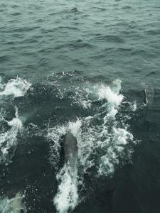 dolphins-san-diego