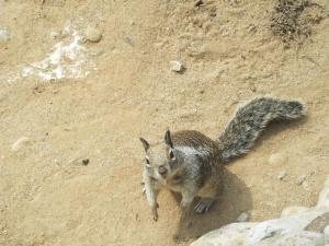 sandiego-squirrel