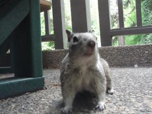 squirrel-in-yosemite