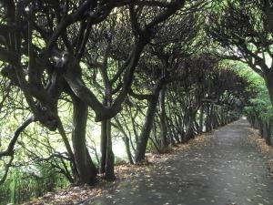 oliwa-park