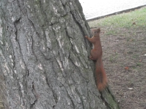 warsaw-squirrel