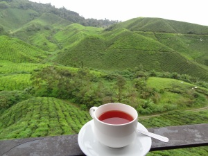 boh_tea_estate