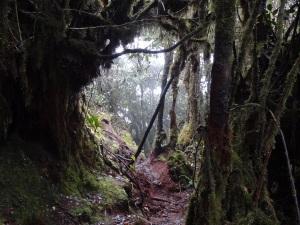 mossyforest-tanahrata