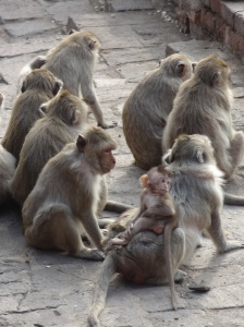 group-of-monkeys