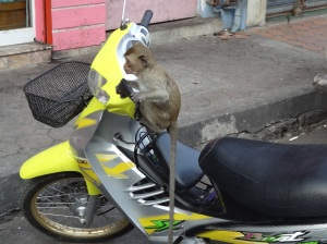 lop-buri-monkey