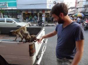lopburi-monkey
