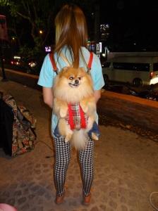 thailand-dog-backpack