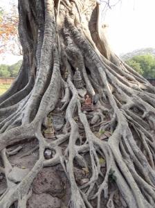 sukhothai_tree