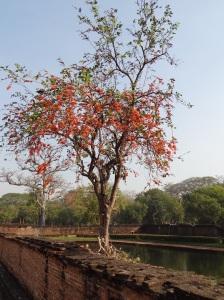 sukhothai_pretty